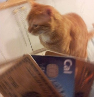 חתול עם כרטיסי אשראי